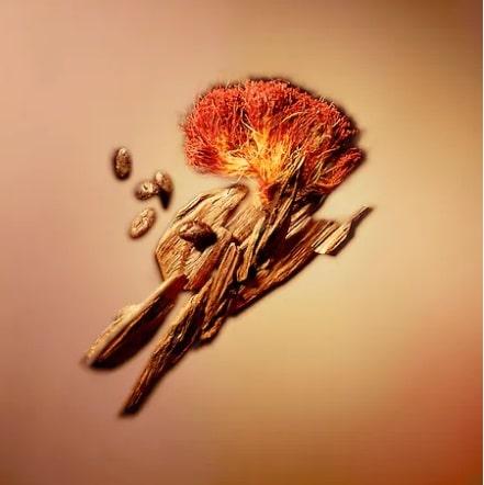「ヌーヴォモンド」香りのイメージ