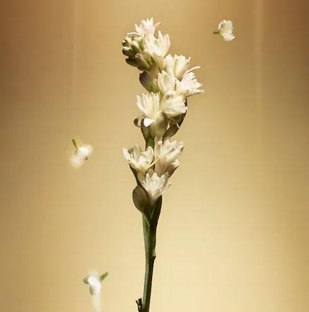 「タービュランス」香りのイメージ